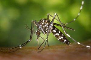 Appareil anti-moustique connecté