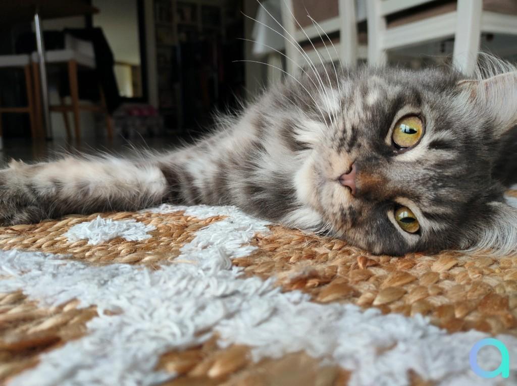 photo chat faite avec capteur 64 MPX du smartphone Realme X3