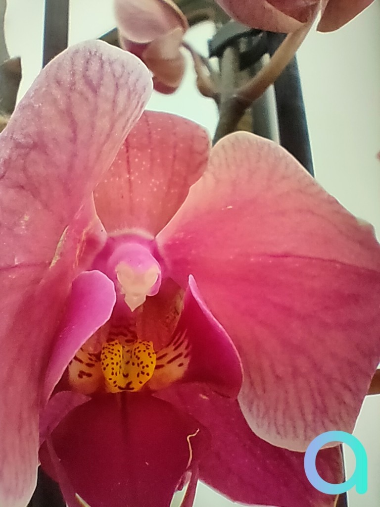 photo fleur prise en mode macro avec le smartphone Realme X3