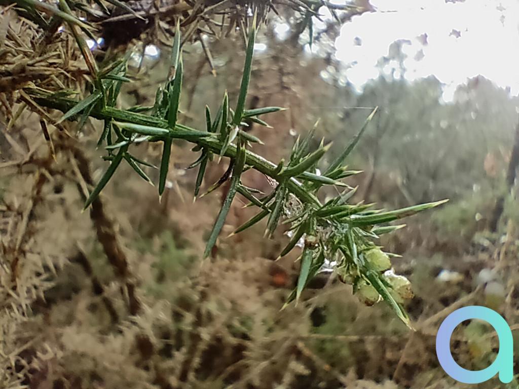 photo tige de fleur avec objectif macro du Realme X3